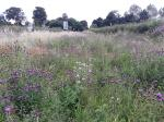Image: Knapweed and Field Scabious